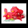 گل بگونیا خوراکی