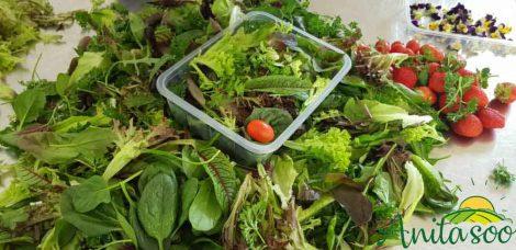 قیمت سبزی صادراتی